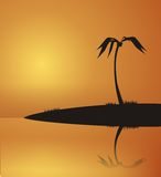 Palm on the island Royalty Free Stock Images