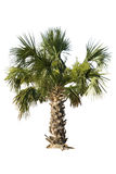 Palm isolated Stock Photo