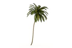 Palm isolated Royalty Free Stock Photos