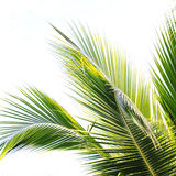 Palm Royalty Free Stock Photo