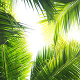 Palm Jungle stock photo