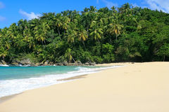Palm jungle on beach. Of ocean Stock Images