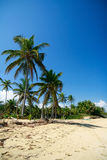 Palm jungle on beach of Atlantic ocean Royalty Free Stock Image
