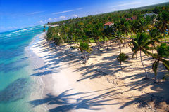 Palm jungle on caribbean coastline from helicopter Royalty Free Stock Photo