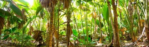 Palm jungle panorama Royalty Free Stock Photography