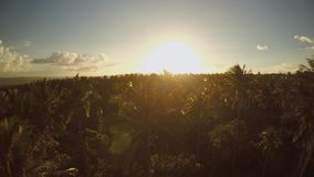 Palm jungle at sunset at the foot of the Mayon volcano. Philippines.