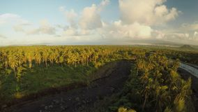 Palm jungle at sunset at the foot of the Mayon volcano. Philippines. Palm jungle at sunset at the foot of the Mayon volcano. Philippines stock video footage