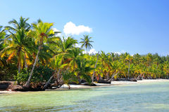 Palm jungle on tropical beach Stock Photo