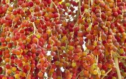 Palm kernel. Stock Image