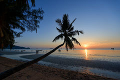 Palm koh tao Royalty Free Stock Photography