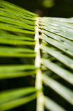 Palm Ladder Stock Photography