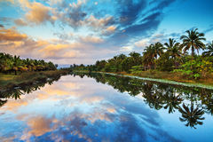 Palm lake reflections Royalty Free Stock Images