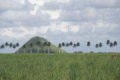 Palm land. Palms and the hill at the horizon royalty free stock image