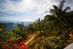 Palm  landscape, flowers, mountains to Thailand Samui Royalty Free Stock Photography