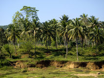 Palm landscape in Sri Lanka Royalty Free Stock Photos