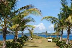 The Palm Lane. The resort palm lane on St.Thomas island, U.S. Virgin Islands Stock Images