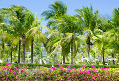 Palm lane at sea resort Royalty Free Stock Images