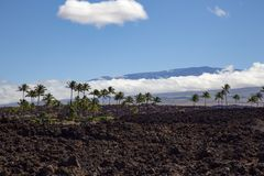 Palm lava field. Observatory on Mauna Kea with extinct lava field and palm trees royalty free stock images