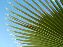 Palm leaf. Palm tree leaf against bright blue sky royalty free stock photo