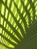 Palm leaf. Abstract background of palm leaf and shadow on it Royalty Free Stock Photography