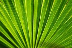 Palm leaf. Green full frame palm leaf Stock Photo