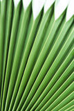 Palm leaf Stock Photos
