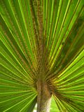 A palm leaf Royalty Free Stock Photography