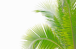 Free Palm Leaf Royalty Free Stock Photography - 18831767