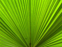 Palm leaf 2 Stock Image