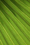 Palm leaf. Vertical royalty free stock images