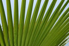 Palm leaf. Fragment of a palm leaf on a background of the sky Stock Images
