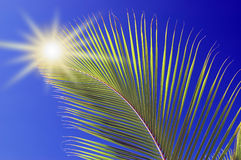 Palm leaf. Closeup of palm leaf in front of blue sky Royalty Free Stock Photos