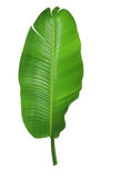 Palm Leaf. On White Background Royalty Free Stock Photo
