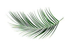 Free Palm Leaf Stock Images - 29916714