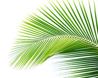 Free Palm Leaf Stock Images - 30093414