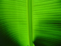 Palm leaf! stock photography