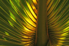 Palm leaf. Colorful background image of a palm leaf stock photos