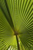 Palm Leaf. Abstract starburst pattern stock photos