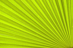 Free Palm Leaf Stock Images - 3796534
