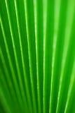 Palm leaf. Detailed green palm leaf pattern background Stock Image