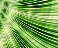 Palm leaf. Close up abstract background of a beautiful green palm leaf fan on a sunny day Royalty Free Stock Photography