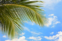 Palm leaf. Against blue sky at sunlight royalty free stock photo