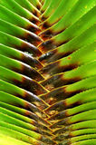 Palm leaf. Patterns of palm leaves in tropical land Stock Photos