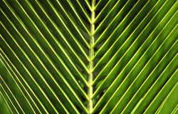 Palm-leaf Royalty Free Stock Photography