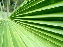 Palm Leaf. In the caribbean Stock Images
