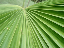 Palm Leaf. In the caribbean Royalty Free Stock Images