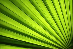 Palm Leaf. Microscopic view of palm leaf royalty free stock image