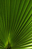 Palm leaf abstract Royalty Free Stock Photos