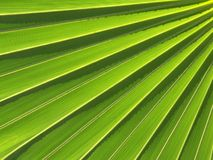Palm Leaf Abstract Royalty Free Stock Photography