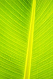 Palm leaf abstract in close up Royalty Free Stock Photography